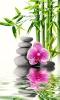 Tízmilliószoros napi meditáció